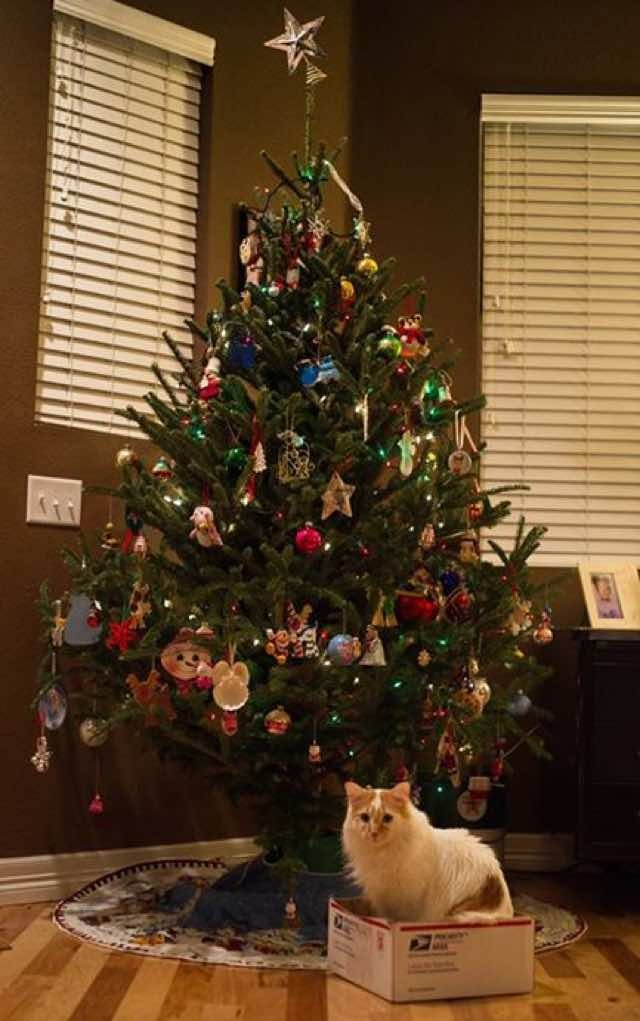 10 Cats Proud Of Their Work With The Christmas Tree