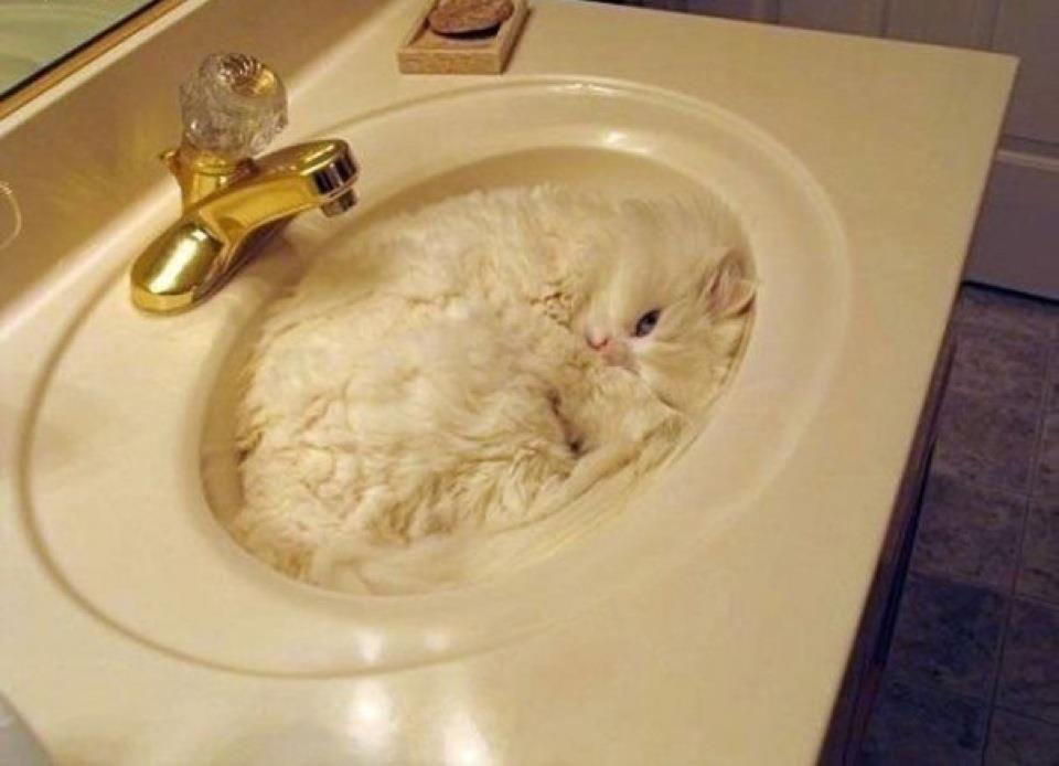 26 Cats Who Are Getting Cozy In The ... Sink? – Meowingtons