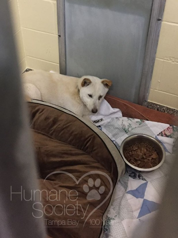 Frightened dog at shelter