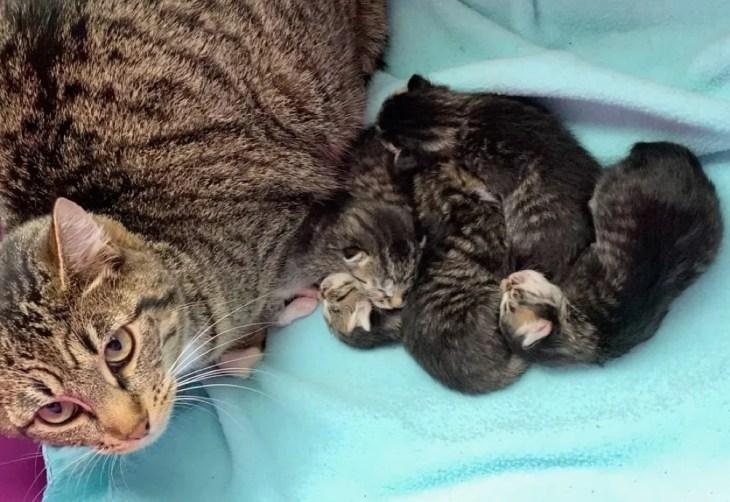mãe gato, gatinhos, orgulhoso