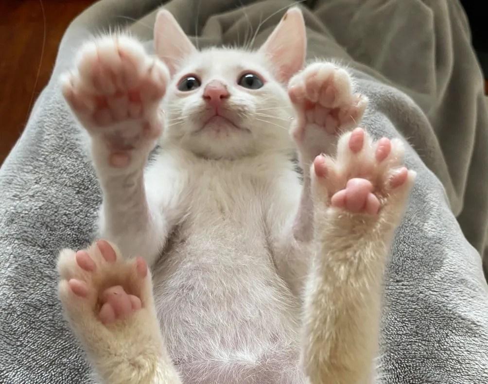 cute, kitten, paws, toe beans