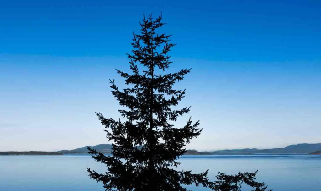 Portland high school's choice of new mascot — evergreen trees — could be a problem due to lynching connotations, officials say