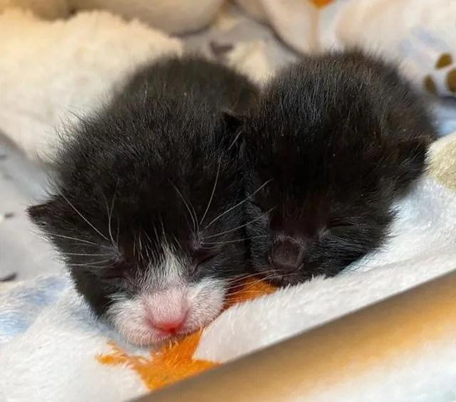 gatitos unidos, gatitos bebés