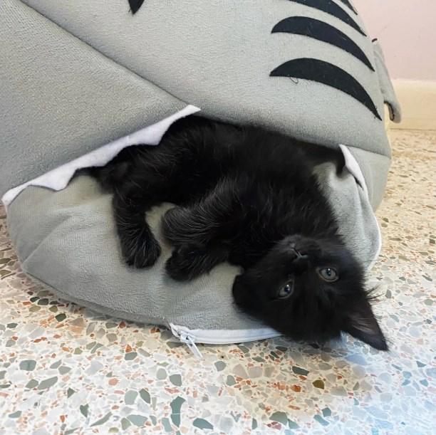 cama de tubarão, cama de gatinho