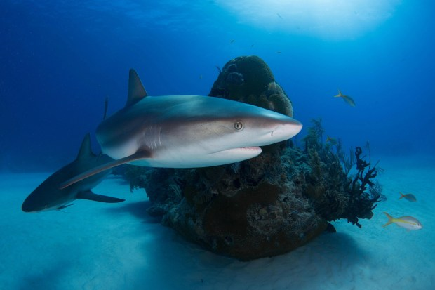 Sharks and fish swimming in ocean