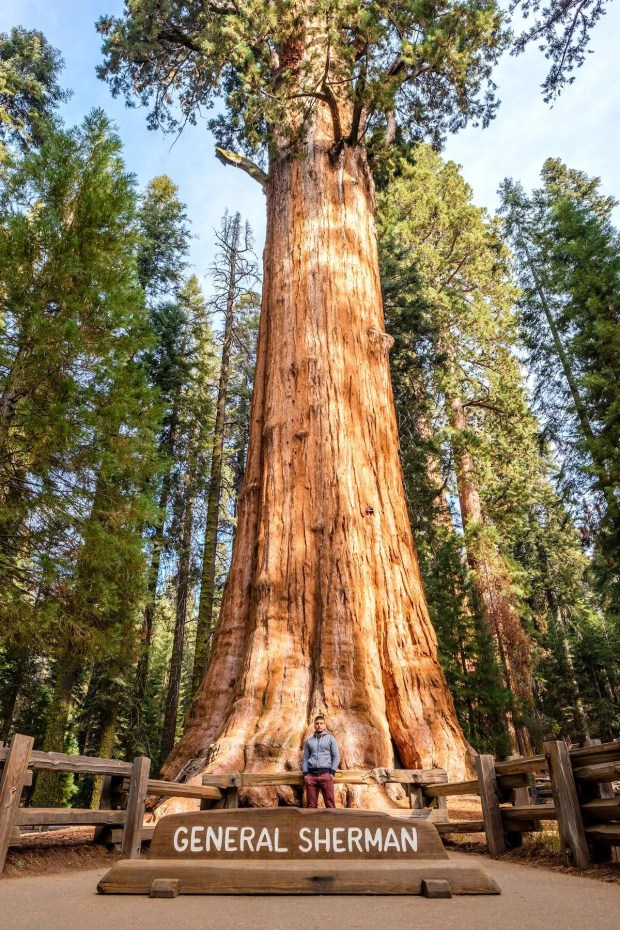 A tourist in Sequoia National Park in front of the largest tree in the world.