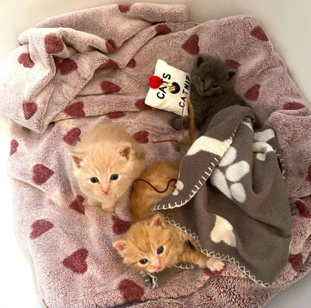 trio de chatons collés
