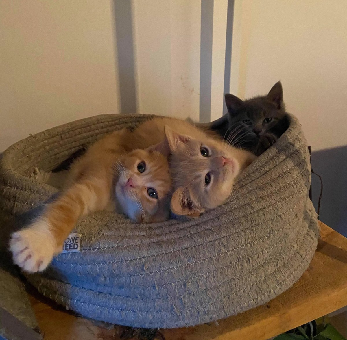 chatons douillets