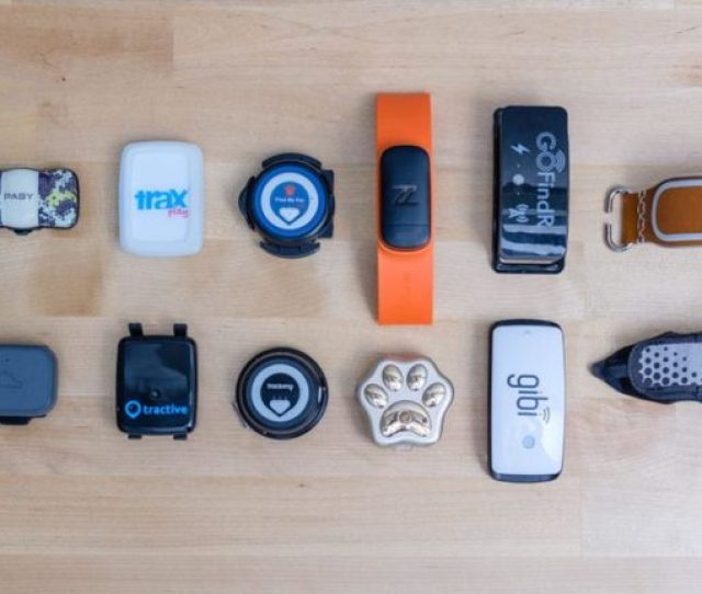 Finalists For Pet Gps Tracker