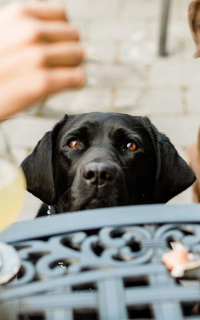 dog friendly patios