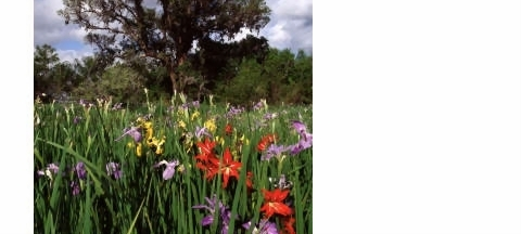 Flowers along Creole Nature Trail