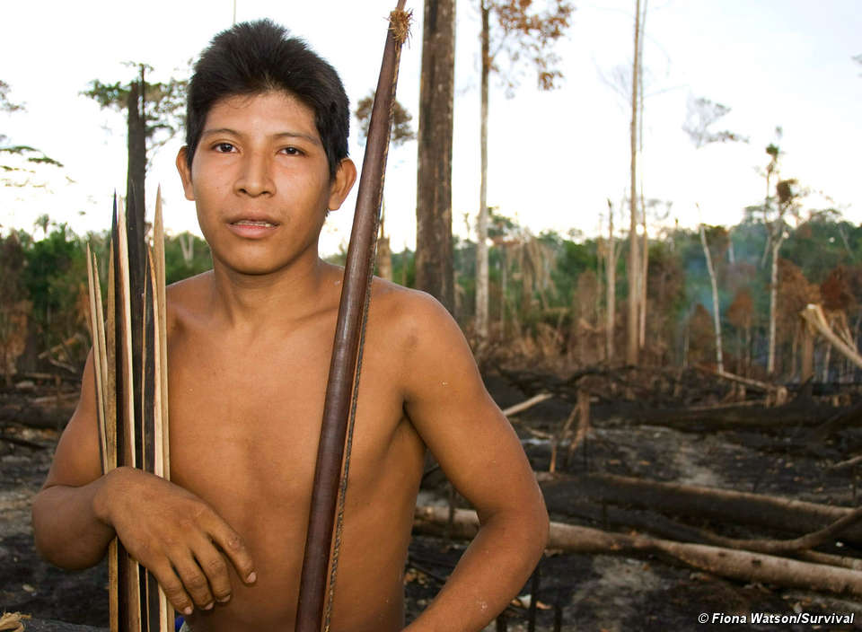 The Awá's forest is being illegally cut down at an alarming rate.