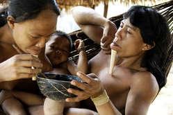 Après les épidémies des années 1980, la population zo'é est maintenant stabilisée