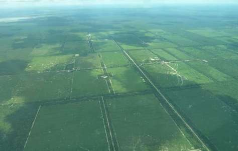 Aerial photograph showing the devastation that logging has brought to Ayoreo land.
