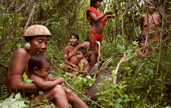 Napoleon Chagnon's view that the Yanomami are 'sly, aggressive and intimidating' and that they 'live in a state of chronic warfare' has been widely discredited.