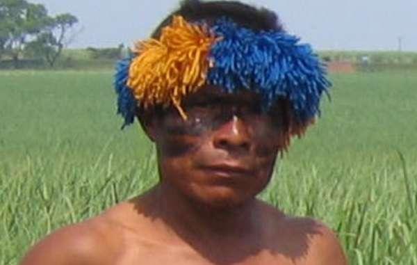 Un Guarani devant des plantations de canne à sucre cultivée sur ce qui fut autrefois sa forêt.