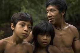 Les Awá ont été conduits au bord de l'extinction par les vagues de bûcherons illégaux, de colons et d'éleveurs qui ont envahi leurs terres.