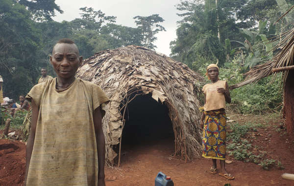 Los bakas temen adentrarse en el bosque que les proporcionaba todo cuanto necesitan.