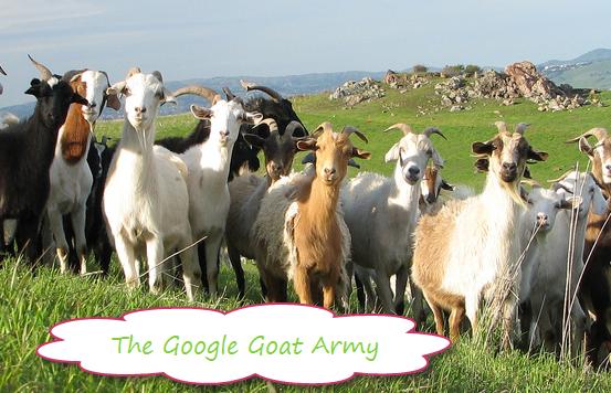 Google_Goat_Army