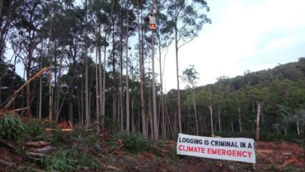 At the time of Justice Mortimer's ruling, the activist group Protect Warburton Ranges was staging four separate protests in active logging coupes across the Central Highlands region. Photo supplied: Protect Warburton Ranges.