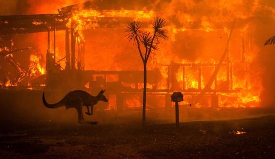 Tiltify Gaming4life 2020 Australian Bushfire Appeal