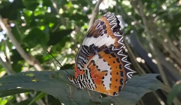 various species of butterflies