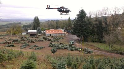 Tree growers have learned to appreciate the efficiency and ability of helicopters to keep processing costs down and production rates up by moving the trees directly to the handling and shipping facility.