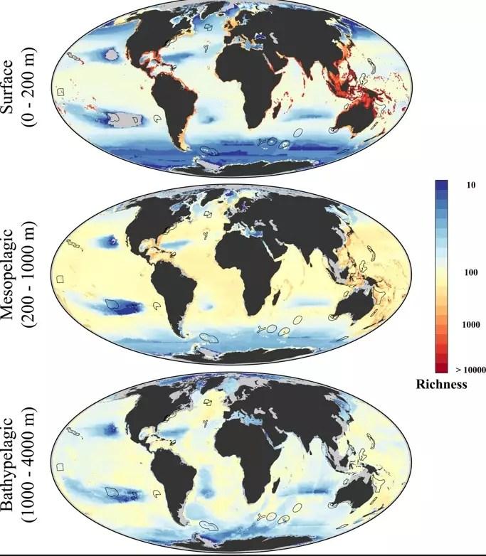 El calor extra de los niveles crecientes de gases de efecto invernadero hace que sea difícil para la vida marina adaptarse.