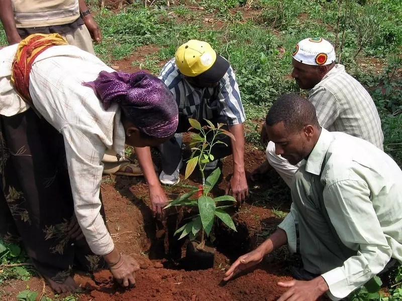 Etiopía plantó aproximadamente 350 millones de árboles en un solo día en 2019.