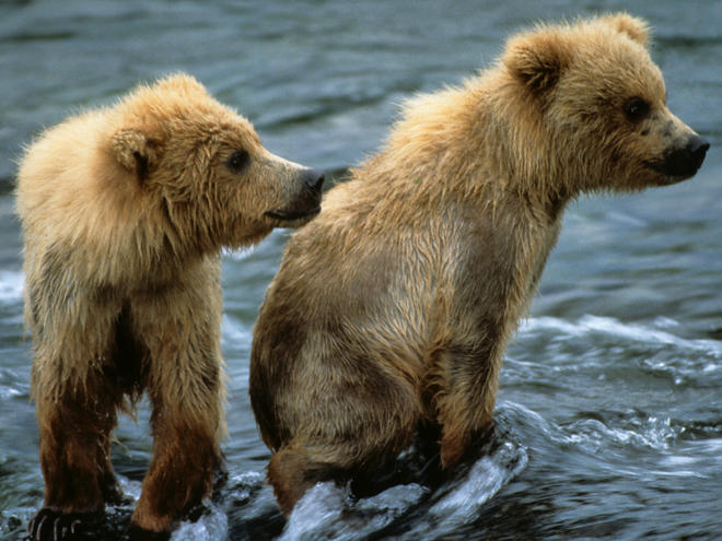 Bear Pictures