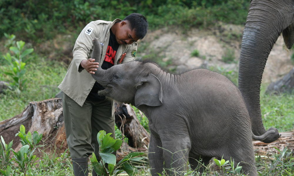 flying squad member with a young sumatran elephant