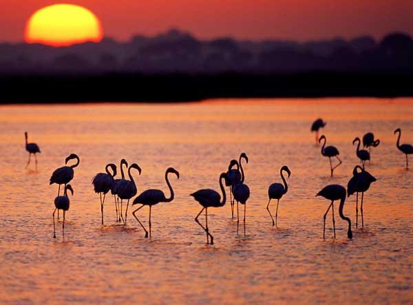 imagem-de-flamingos-no-por-sol