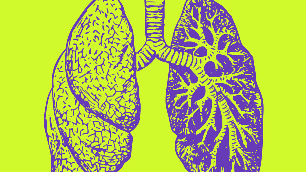 Image result for lab-grown lungs illustration