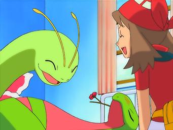 pokemon May