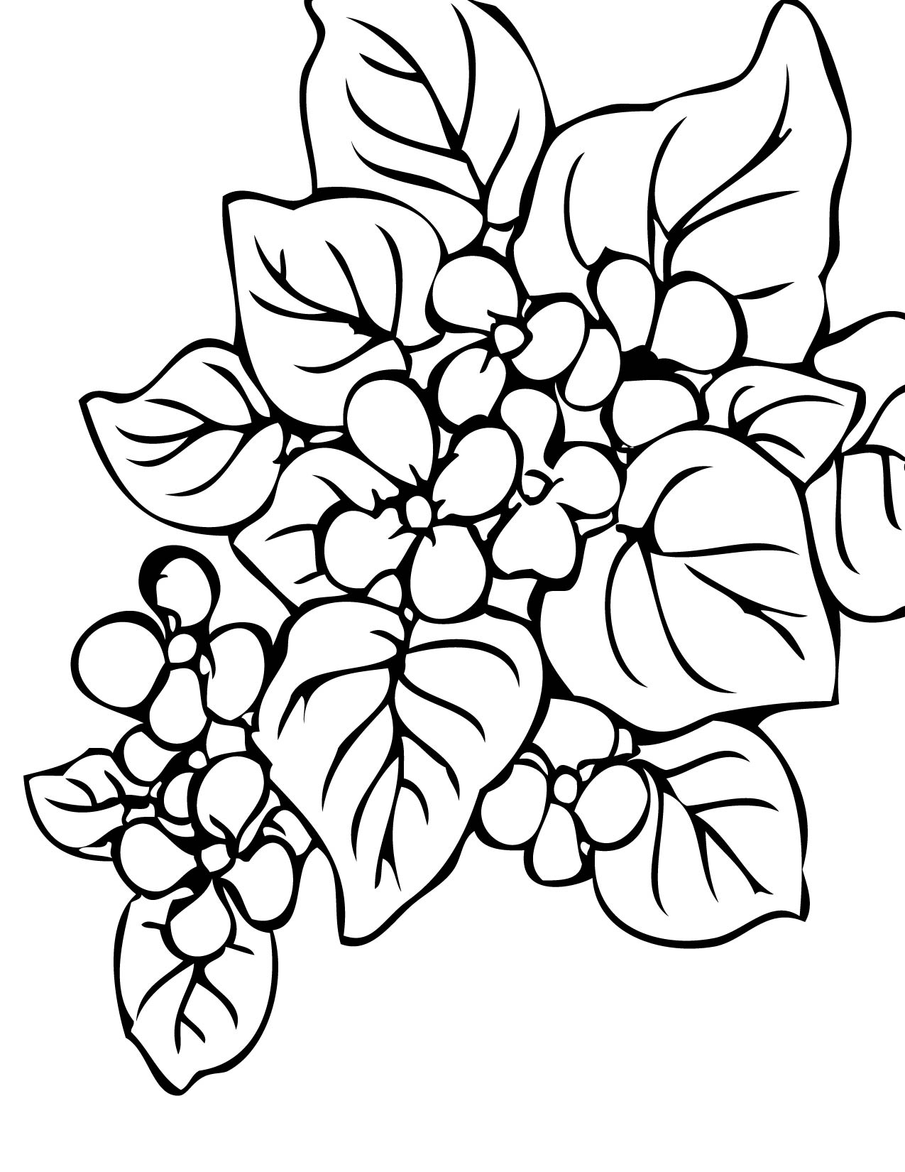- Rainforest Plants Coloring Pages Azspringtrainingexperience