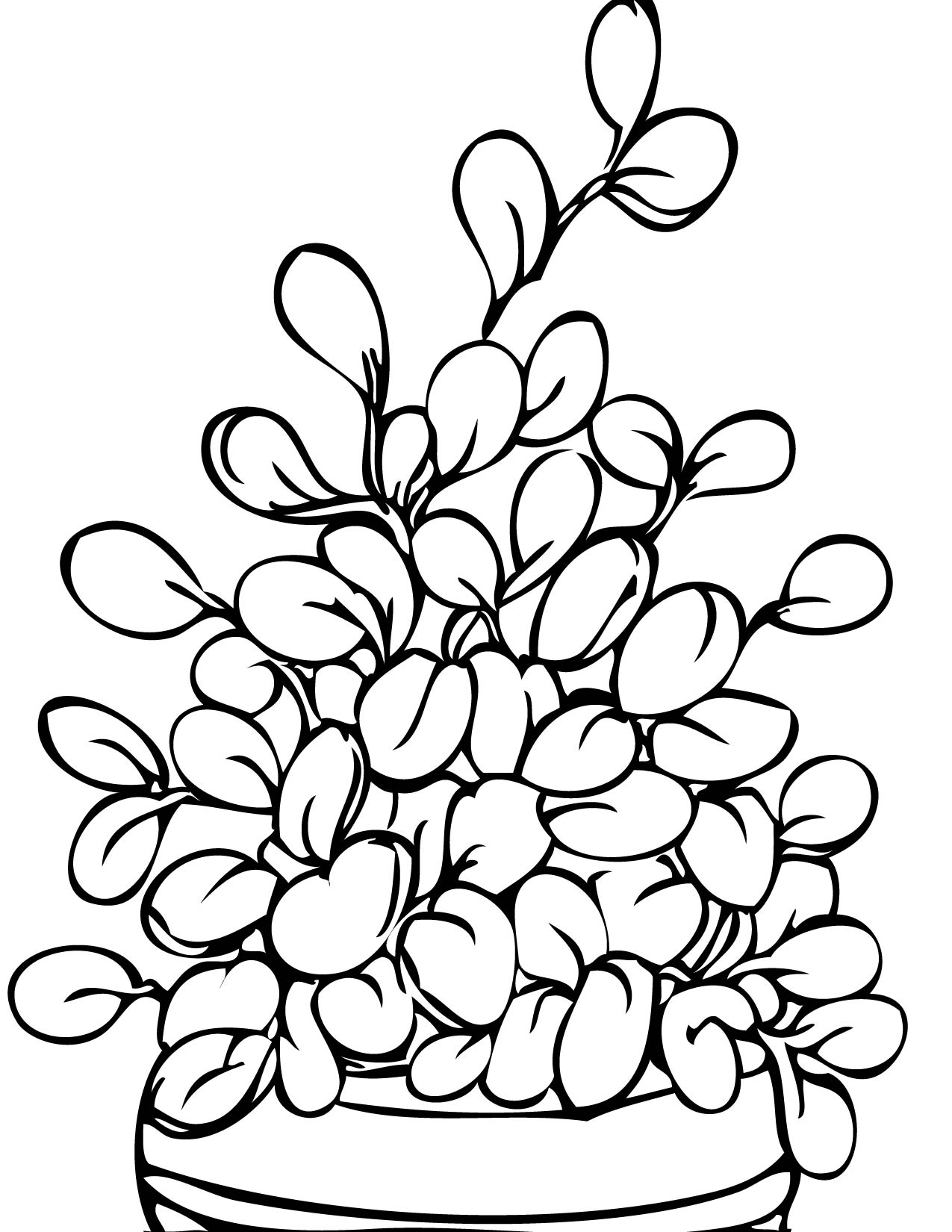 jade plant coloring page handipoints