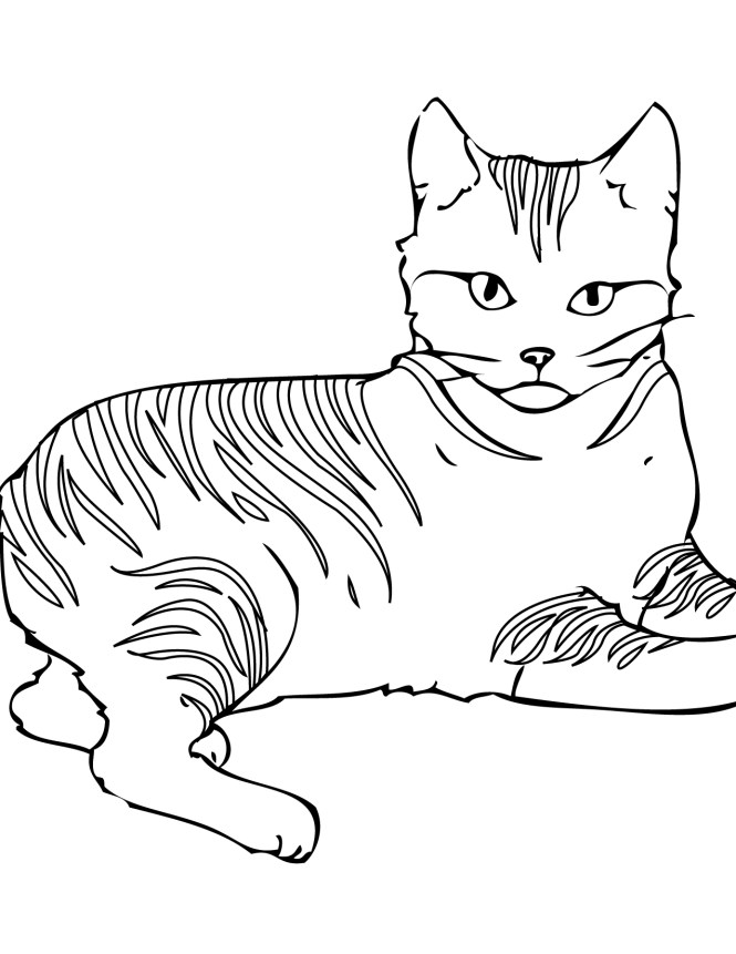 Cats Coloring Pages Pixie Bob