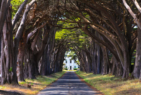 Things to Do in Northern California Before You Die  A NorCal Bucket     Cypress tree tunnel in California