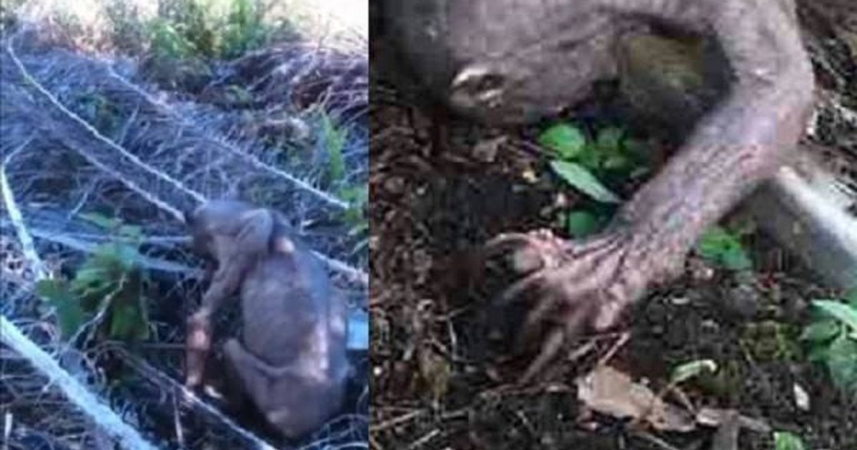 The Tragic Truth Behind Alien Like Creature Caught On