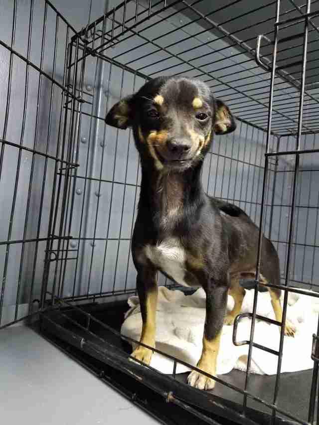 smiling shelter dog