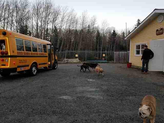 perros en la guardería de perros