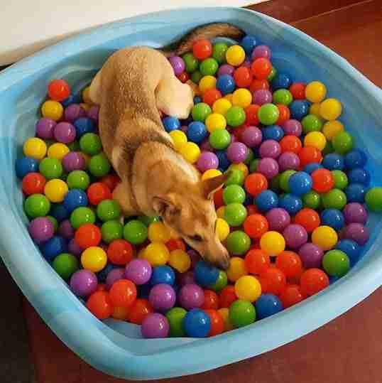 perro en un hoyo de pelota