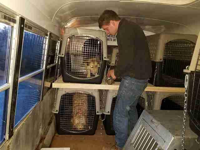 perros en el autobús a la guardería