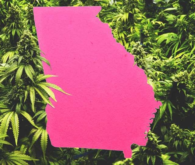 Georgia Weed