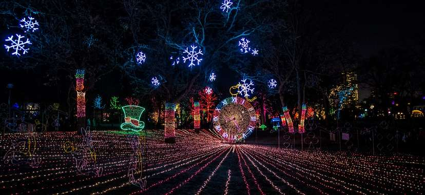 Zoo Lights Sf