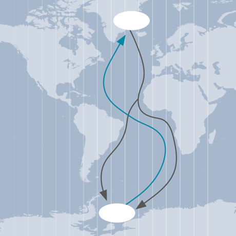 Arctic tern migration path over the Atlantic Ocean
