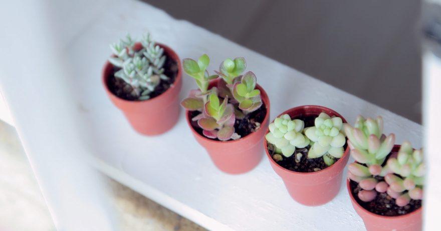 4つの多肉植物
