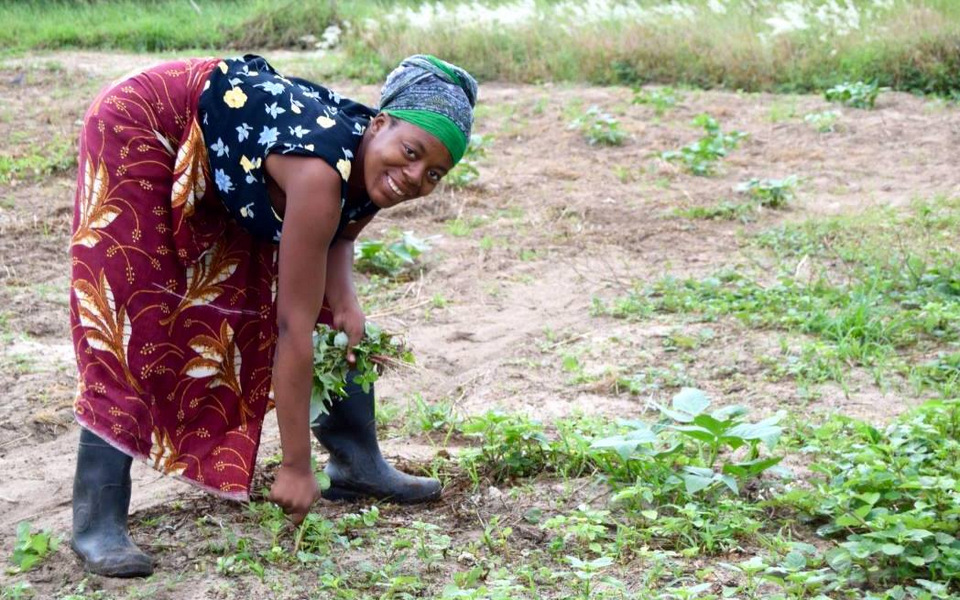 Maura er ved at luge blandt de grønne bønner