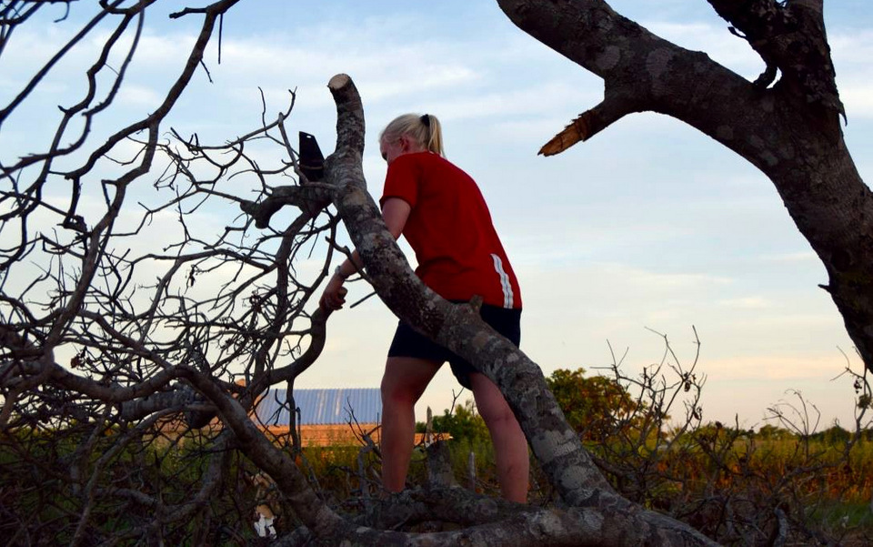 Anne i gang med at save i et af de store træer som væltede i stormen