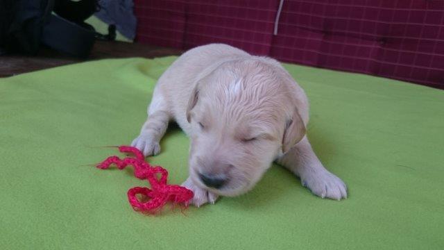 Meine erstes Hundejahr